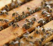 Oprema za ohranjanje zdravja čebel