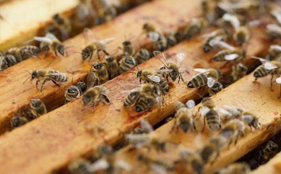 Čebelarska oprema je v današnjem času zelo sodobna in dosegljiva